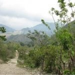 This is the primary coffee access road from the mountains down into the town of Peralta where the coffee is dried. Altitude is appx. 2000 feet. Photo by Barth Anderson.